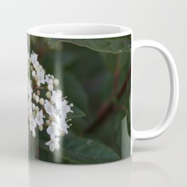 Viburnum tinus flowers and buds Coffee Mug