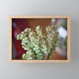 Fat Plants Thorns Cactus Framed Mini Art Print