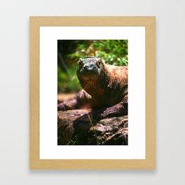 Curious Komodo Framed Art Print