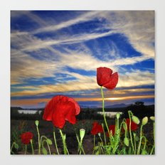 Spring poppies. Sunset. Canvas Print