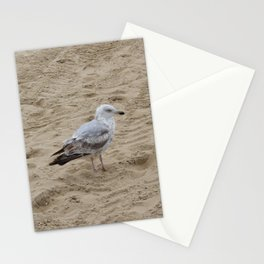 Seagull in the sand 3 Stationery Cards
