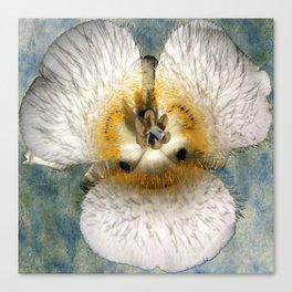 Mariposa Lily 1 Canvas Print