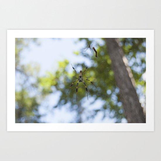 Spider 1   Picture B Art Print