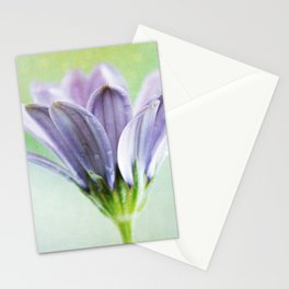 african daisy Stationery Cards