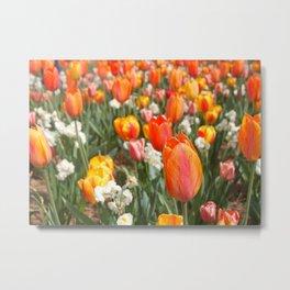 Tulip Field Metal Print