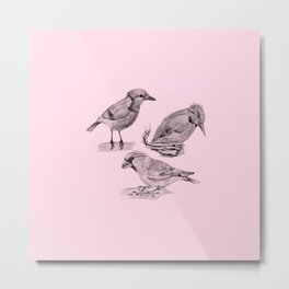 Candy Birds  2 Metal Print