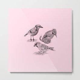 Candy Birds  2 Metal Print