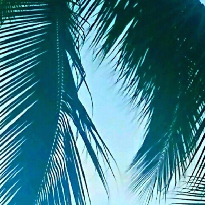 Tropical Breeze Leggings