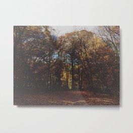 l'automne qui brille. Metal Print