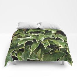 Variegated Ivy Comforters