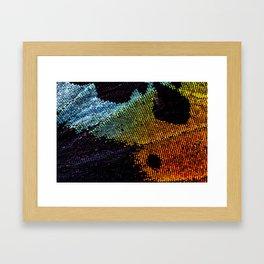Vibrant Iridescence of The Madagascan Sunset Moth Framed Art Print