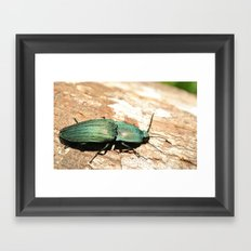 Bug on a Log Framed Art Print
