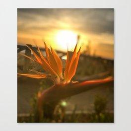 Sunset on Santa Monica beach Canvas Print