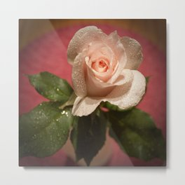 Dew Kissed Rose Metal Print