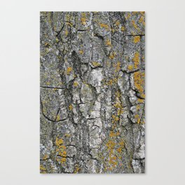 Tree texture Canvas Print