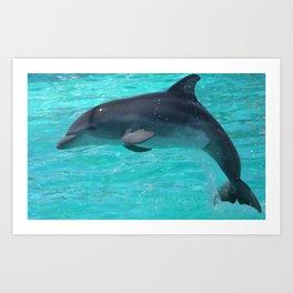 Baby Dolphin Art Print