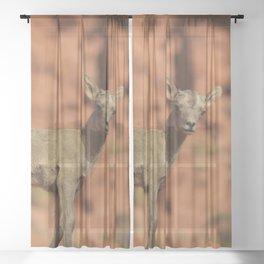 0888 - Twin Baby Desert Bighorn Sheep Sheer Curtain