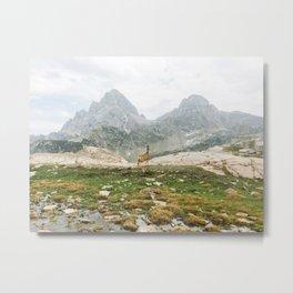Deer in Front of Teton Mountains Metal Print