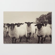 You looking at me Canvas Print