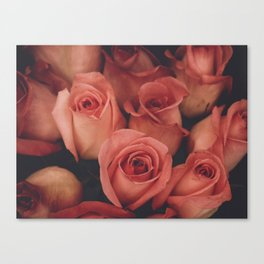 vintage pink roses Canvas Print