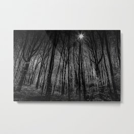 Winter Day in the Forest Metal Print