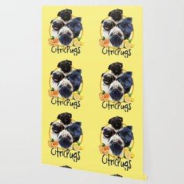 Citricpugs Wallpaper