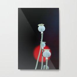 Poppy capsule Metal Print