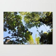 Canopy I Canvas Print