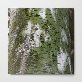 Birch Bark Pattern Green and White Wood Pattern Bring the Outdoors In Metal Print