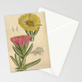 Mesembryanthemum edule/Carpobrotus edulis, Aizoaceae Stationery Cards