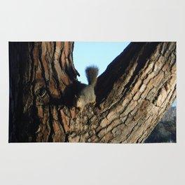 A Squirrel at Griffith Park, California Rug