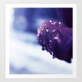 Petal Drops Art Print