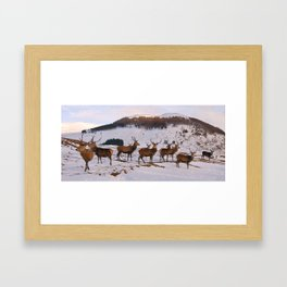 The Gathering of Stags Framed Art Print