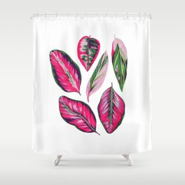 Calathea pink leaves Shower Curtain