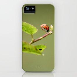 Ladybug Macrosphere iPhone Case
