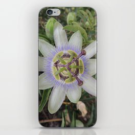 Passion Flower Blossom iPhone Skin