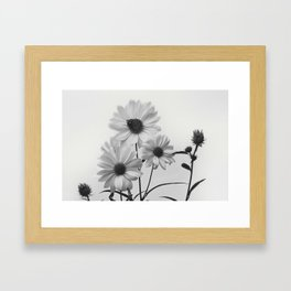 White on White Daisies Framed Art Print