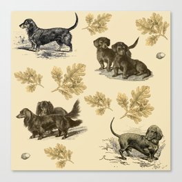 Dachshunds pattern Canvas Print