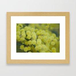 Silver Wattle Framed Art Print