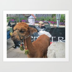 Alpaca 1 Art Print