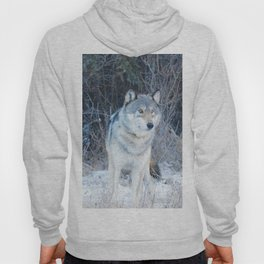 Grey Wolf in the Canadian Rocky Mountains Hoody