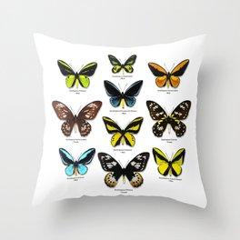 Butterfly012_Ornithoptera Set1 on White Background Throw Pillow