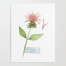 bee balm sketch Poster
