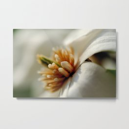 Spring dogwood blossoms Metal Print