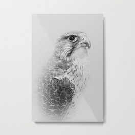 Hawk Portrait | Birds of Prey | Wildlife Photography Metal Print
