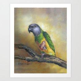 Senegal Parrot Art Print