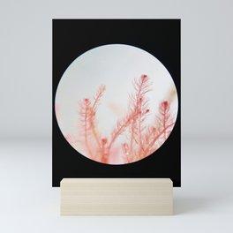 Bonnemaisonia species Mini Art Print