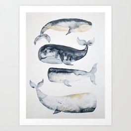 Whale 1 Art Print