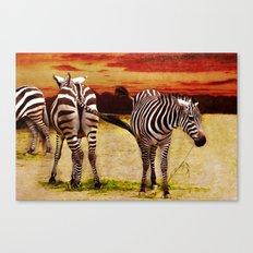 The Zebras Canvas Print