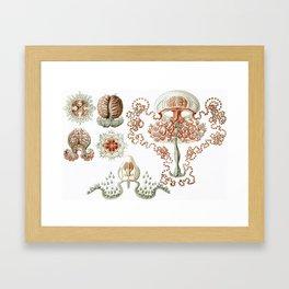 Vintage Anthomedusae (Jellyfish) Print by Ernst Haeckel, 1904 Educational Chart Framed Art Print